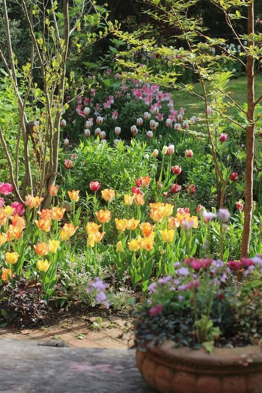春は球根の花が咲き乱れます