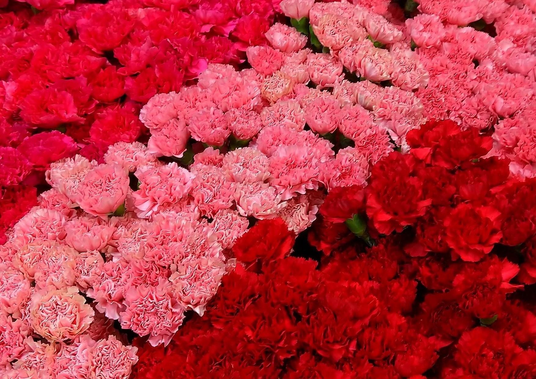 生花商品・胡蝶蘭・観葉植物の配達・納品作業